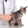 Ветеринарные клиники в Ремонтном